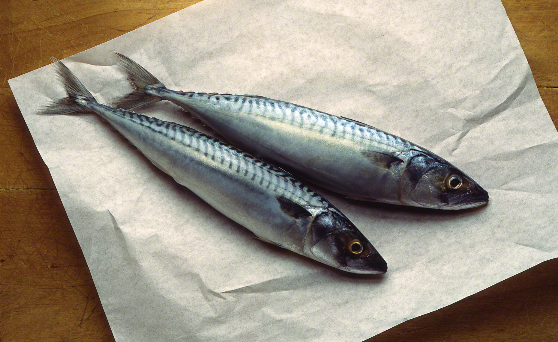 Atlantic Mackerels.jpg